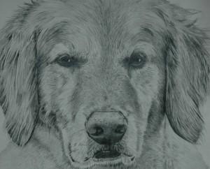 dogfaceweb-300x242