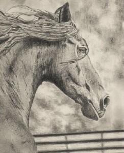 horseweb-243x300